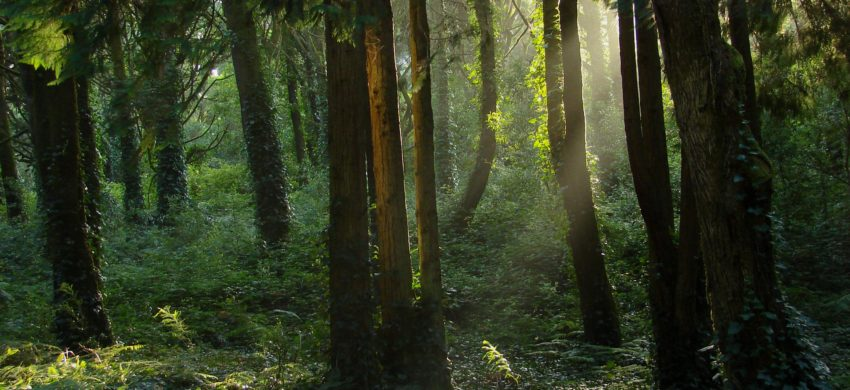 The Ascend Forest Project – planting 10,000 trees